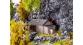 Train électrique : FALLER F130292 - Refuge haute montagne
