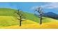 faller 181225 Arbres Denudes Premium diorama