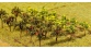 F181253 Arbres fruitiers espalier