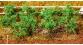 Train électrique : FALLER F181259 - Plants de tomates