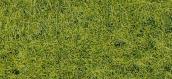 HEKI 1576 herbes sauvages