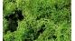 heki 3219 Lichen vert clair, 75g