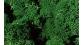 Heki 3211 lichen mousse islande