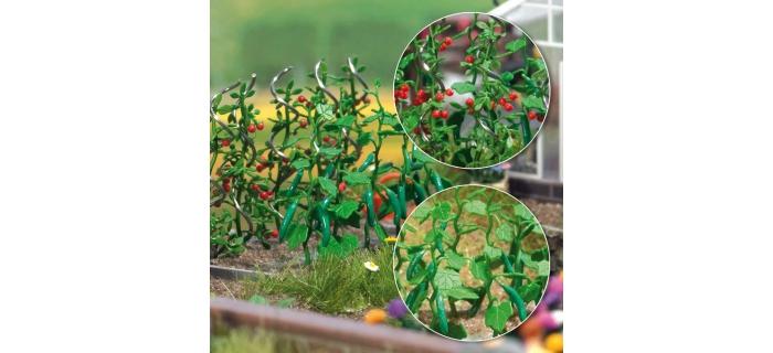 PLANTS DE CONCOMBRES ET TOMATES