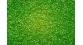 Modélisme ferroviaire : Flocage Vert clair 250 g