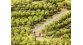 Modélisme ferroviaire : NOCH NO 21545 - Pieds de vigne N