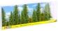 Modélisme ferroviaire : NOCH NO 25086 - Sapins, 80-120 mm